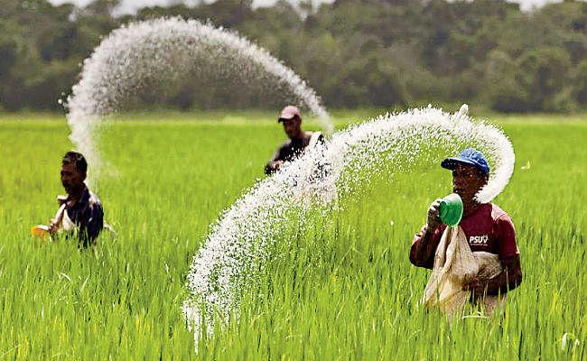 पटना : सूबे में जरूरत से ढाई लाख टन कम यूरिया की आपूर्ति, कमी दूर करने में जुटा कृषि विभाग