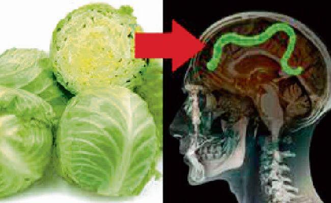 बिहार : सावधानी से खायें हरी सब्जियां, उनमें मौजूद कीड़ा ले सकता है जान