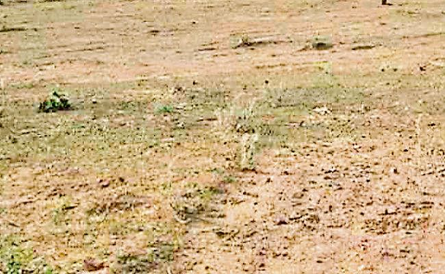 Jharkhand news : आपसी बंटवारा के आधार पर जिलों में नहीं हो रहा जमीन का म्यूटेशन
