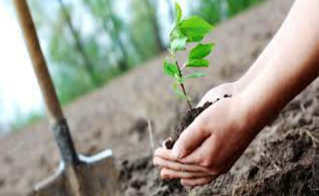 बिहार : 12 जिलाें के पार्कों में लगाये जायेंगे औषधीय पौधे, जानिये पटना के किस पार्क का हुआ चयन