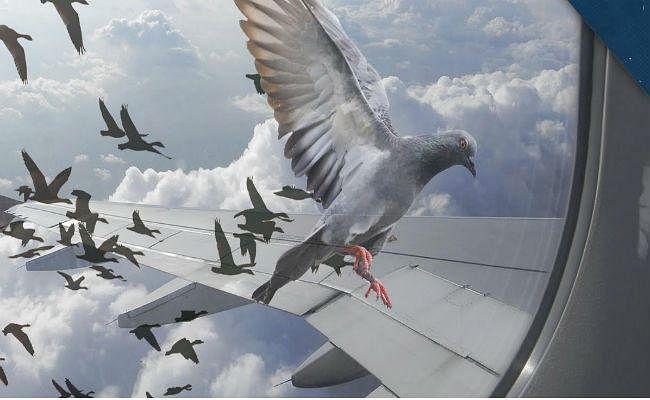 अब फ्लाइट की राह में खतरा नहीं बनेंगे पक्षी, जानें कैसे
