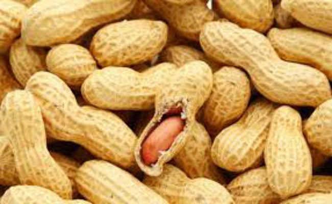 सर्दी में जरूर खायें मूंगफली, लेकिन संभलकर- हो सकते हैं ये नुकसान