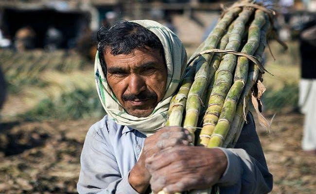 सरकार ने 20 रुपये क्विंटल बढ़ायी गन्ने की कीमत, जानिये किसानों को कितने मिलेंगे दाम...?