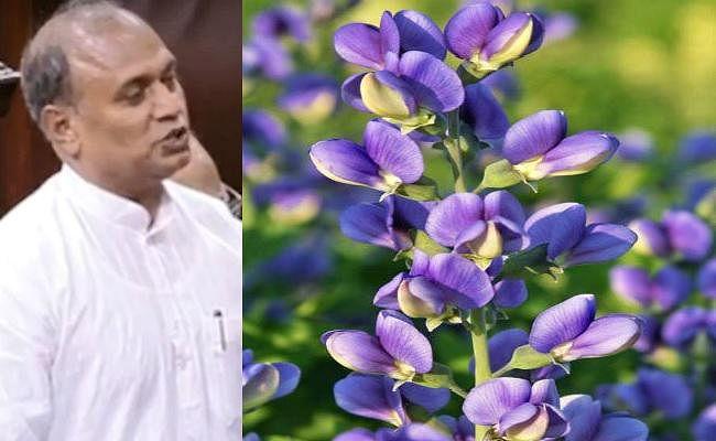 बिहार में फिर से नील की खेती होने का मुद्दा राज्यसभा में उठा, जदयू ने केंद्र से सूखाग्रस्त क्षेत्रों का आकलन कराने की कही बात