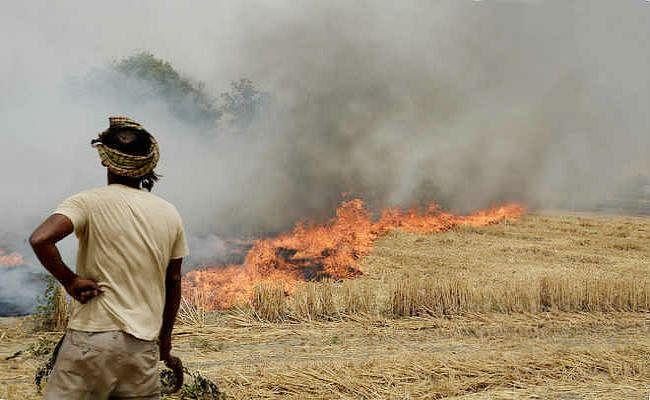 सरकार की किसानों से अपील : जलाने के बजाय बायोगैस आदि बनाने में करें डंठल और पुआल का प्रयोग