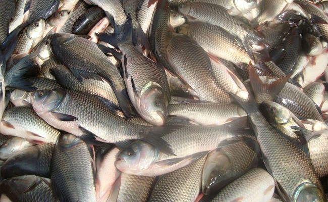 पटना में जिंदा मछलियों की बिक्री पर से रोक हटी
