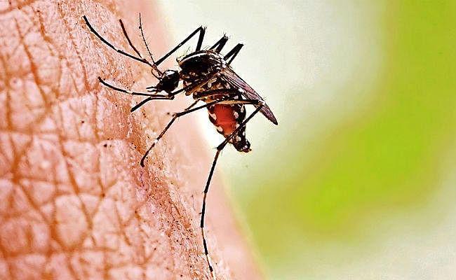 पटना में सीजन में पहली बार मिले डेंगू के दो नये मरीज