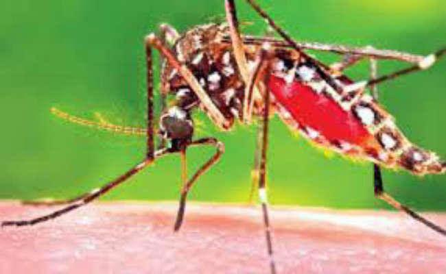 बिहार के इस शहर में कोरोना के बीच मिला पहला डेंगू का मरीज
