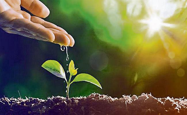 बिहार में अपनी जमीन पर लगाइये 200 पौधे, सरकार देगी चापाकल, साथ में 480 दिनों की मजदूरी भी