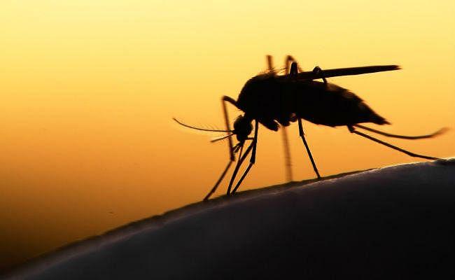 डेंगू के बाद अब मलेरिया से महानगर में एक की मौत