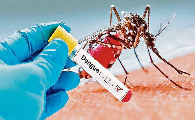 बचाव ही है डेंगू का सफल इलाज