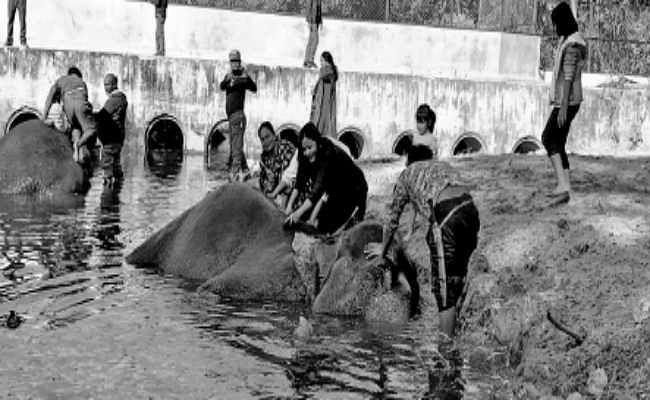 बंगाल सफारी पार्क : पांच सौ रुपये देकर हाथी को नहलाने का लीजिए आनंद