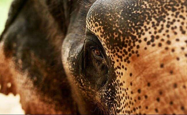 जंगली हाथियों ने तीन घरों को क्षतिग्रस्त किया