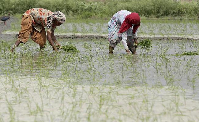 धान बना देगा हरियाणा को राजस्थान जैसा रेगिस्तान?