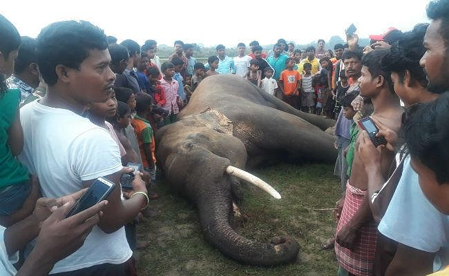 11000 हाई वोल्टेज विद्युत तार की चपेट में आने से जंगली हाथी की हुई मौत, खबर मिलते ही ग्रामीणों की उमड़ी भीड़