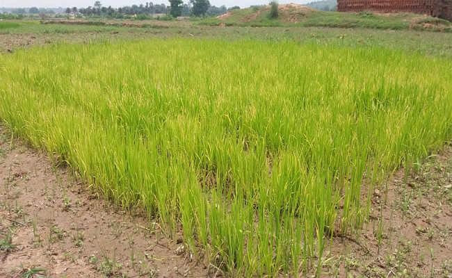 कुजू : सूखे की मार झेल रहे किसानों को अब सरकार का ही सहारा
