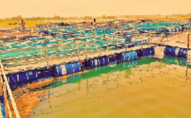 करोड़ों खर्च, नतीजा सिफर, मछली पालन के लिए 1.26 करोड़ से बना केज हुआ बेकार