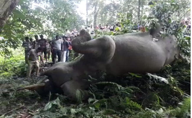बंगाल : जलपाईगुड़ी में करंट लगने से हाथी की मौत