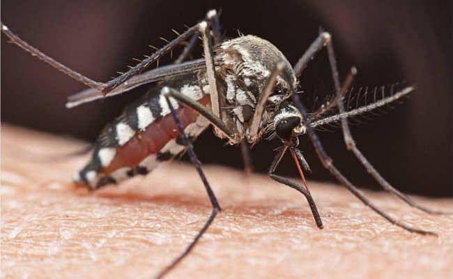 मच्छरों के प्रकोप से लोग हलकान, डेंगू, मलेरिया समेत कई खतरनाक बीमारियों का बढ़ा खतरा