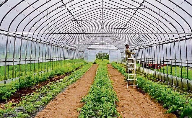 किसान पॉली हाउस में करें सब्जी व फूलों की खेती, होगा अधिक लाभ