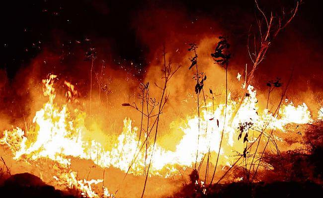 दहक रहे हैं अमेजन के जंगल, चरम पर है विनाश