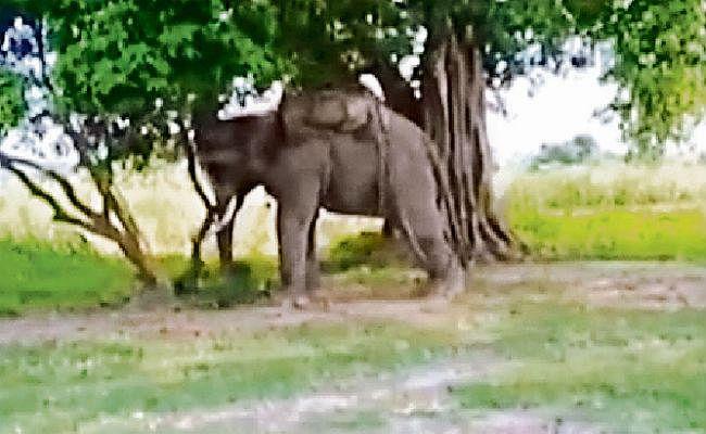 पूचं : सनके हाथी से जान बचा भागते समय बोलेरो के नीचे आया महावत, मौत