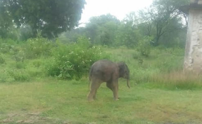 झारखंड : मां से बिछड़ा हाथी का बच्चा गांव में पहुंचा, तो सेल्फी लेने लगे लोग, फिर थोड़ी देर बाद...