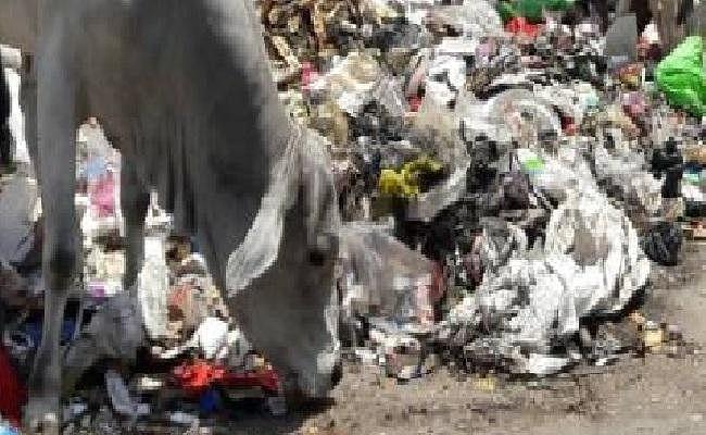 प्लास्टिक के कारण हो रही है पशुओं की मौत, सरकार गंभीर