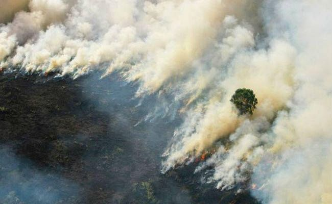 इंडोनिशिया : जंगल की आग ने एक करोड़ बच्चों को जोखिम में डाला, सांस की बीमारी का बढ़ा खतरा
