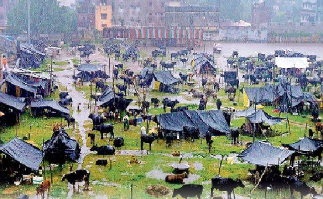 कोसी व पूर्व बिहार में बाढ़ का कहर जारी, मची तबाही, आज भी भारी बारिश की संभावना, स्कूल बंद