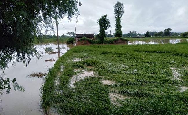 Jharkhand : सूखाग्रस्त घोषित होने के बाद गढ़वा में आयी बाढ़, मवेशी चराने गया एक व्यक्ति बहा, फसलें बर्बाद