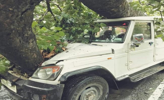 बोलेरो पर गिरा पीपल का पेड़, चालक समेत तीन जख्मी