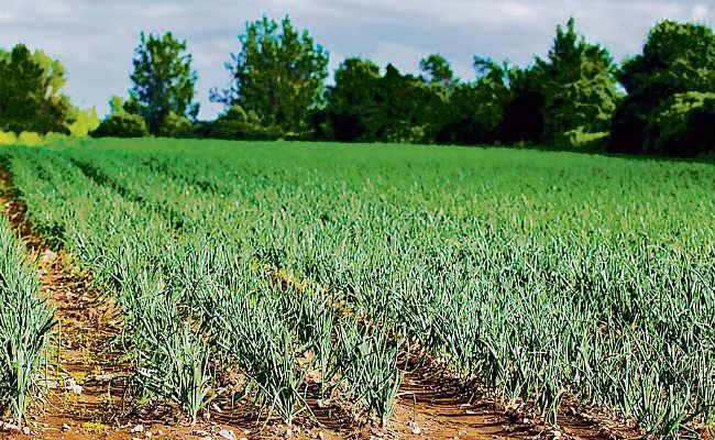 जैविक खेती के लिए अब बिहार देगा मान्यता