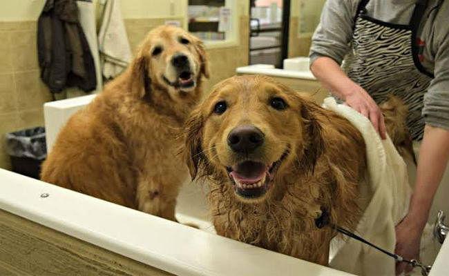 जल्द ही कुत्तों के लिए खुलेगा 'होटल'