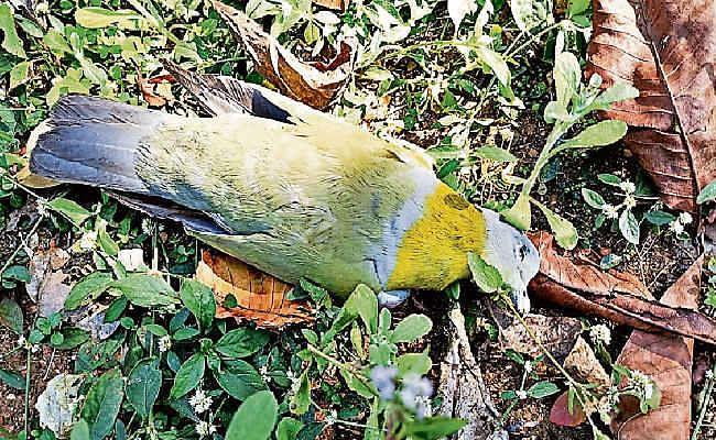 बेतला नेशनल पार्क में मर रहे पक्षी, दो दुर्लभ पक्षी की भी मौत, अज्ञात बीमारी की आशंका