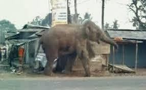 हाथी ने देवपाड़ा चाय बागान में पांच श्रमिक आवास तोड़े