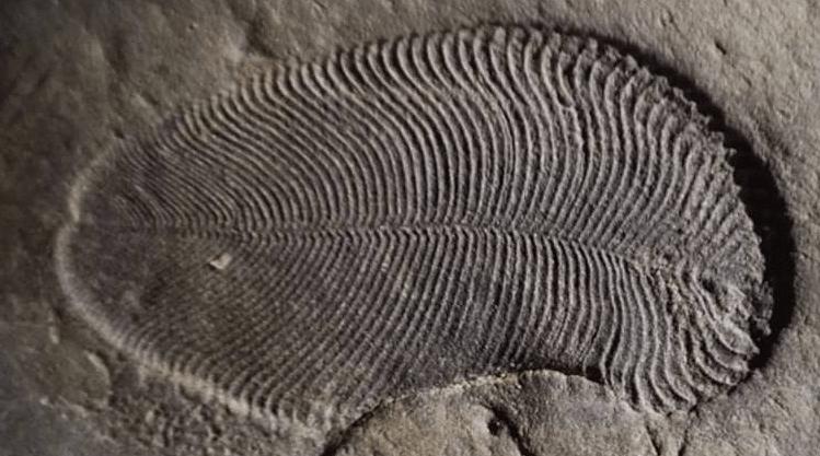 धरती का सबसे पुराना जीवित जानवर 'जोनाथन' कौन है?