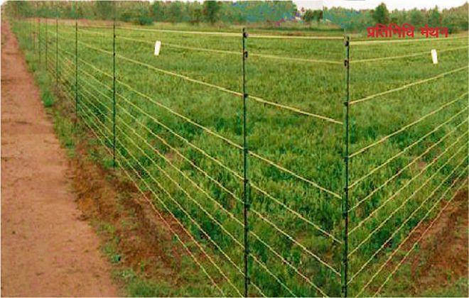 कंपोजिट सौर फेंसिंग से होगी खेतों में लगी फसलों की सुरक्षा