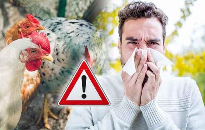 Bird Flu क्या है? इससे जुड़े सभी सवालों के जवाब!