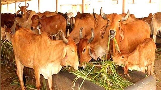 کرناٹک: گائے ذبیحہ کی روک تھام سے متعلق قانون کے لیے آرڈیننس لانے کی تیاری