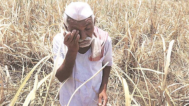 اناج پیدا کرنے والا کسان بی جے پی رہنما کی نظرمیں بے ایمان اور چور