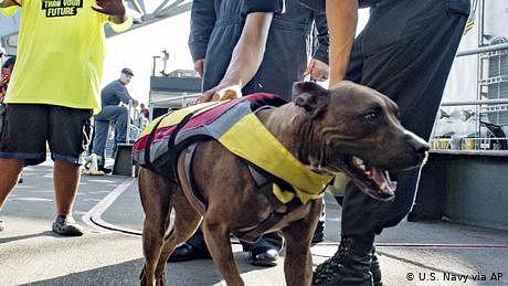 دو سو سے زائد کلومیٹر تک تیرنے والے کتے کو بچا لیا گیا