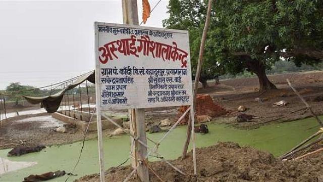 یوگی حکومت میں گئو رکشا کے تمام دعوے فیل، گئوشالہ میں 35 گایوں کی دردناک موت