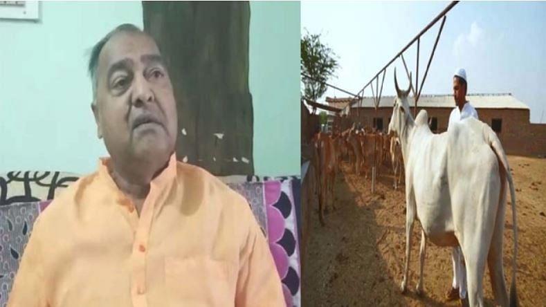 اہم خبر: گائے کا مسلمانوں کے گھر پر ہونا 'لو جہاد'... بی جے پی لیڈر