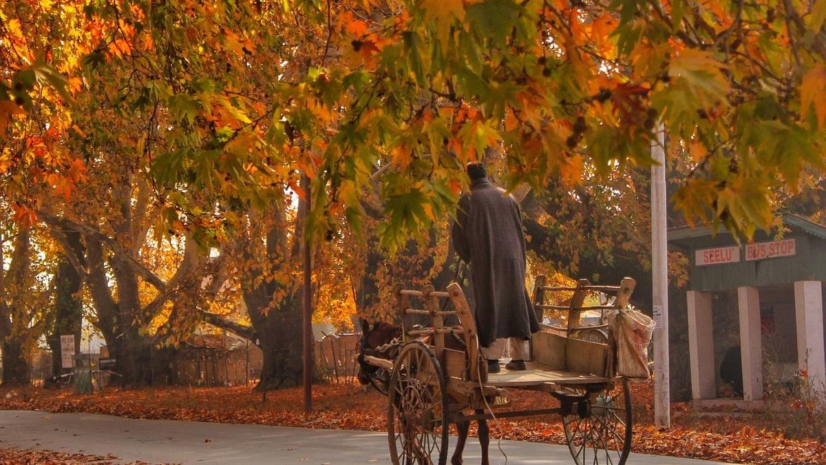 وادیٔ کشمیر میں موسم خزاں کا آغاز لیکن سیاح ندارد