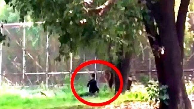 دہلی: شیر کے باڑے  میں گر گیا ریحان، جانیں اس کے بعد کیا ہوا!