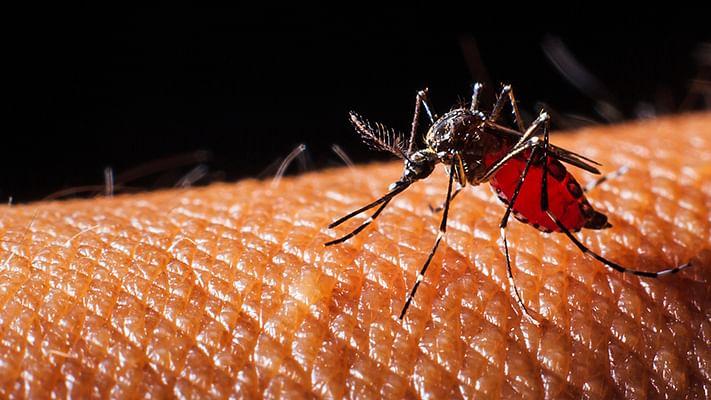 تمل ناڈو: دو بچوں کی ڈینگو بخار کے سبب  موت