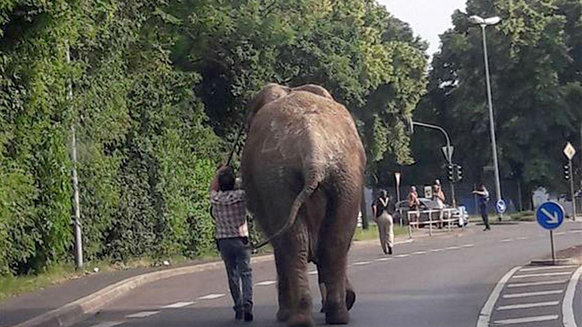 اسپین میں گرمیاں گزار کر ہاتھیوں کا جوڑا واپس سرکس پہنچ گیا
