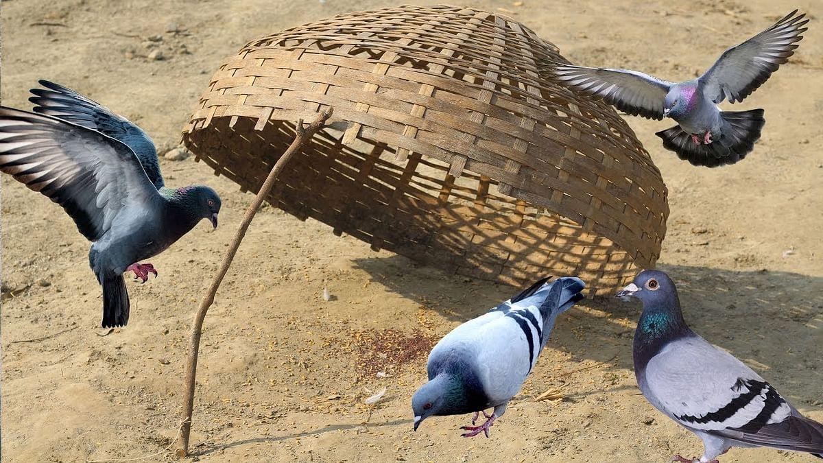 طنز و مزاح: آزاد کیا ہوئے کہ گرفتار ہوگئے... تقدیس نقوی
