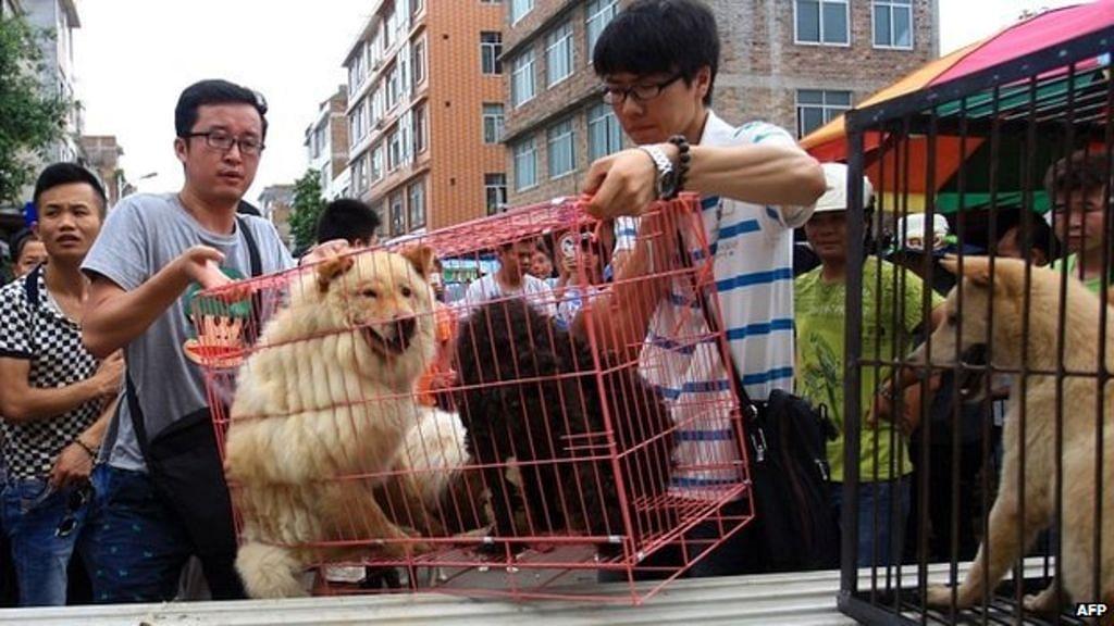 چین: کتوں کے گوشت پر پابندی عائد کرنے کی تیاری!